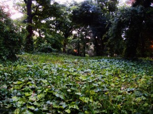 Jardín Botánico (foto propia, 2013)