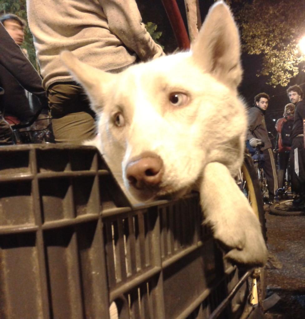 foto perro masa crítica