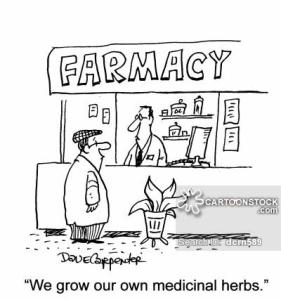 Cultivamos nuestras propias hierbas