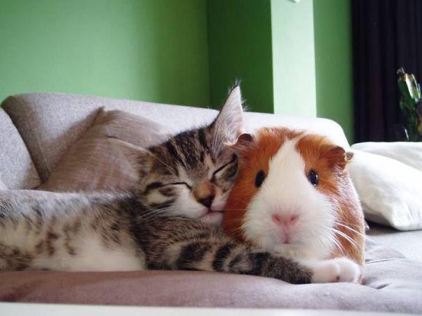 animales-companeros-siesta