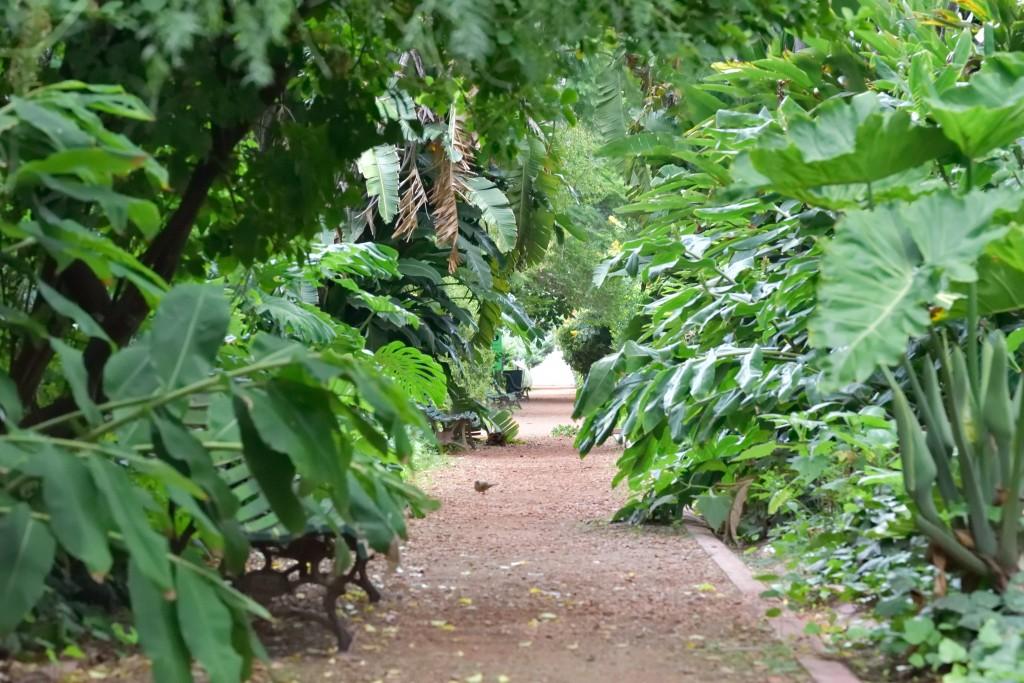botánical garden in Buenos Aires