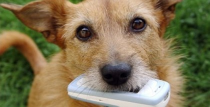 dog-with-phone