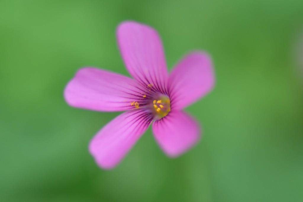 flor lila verde