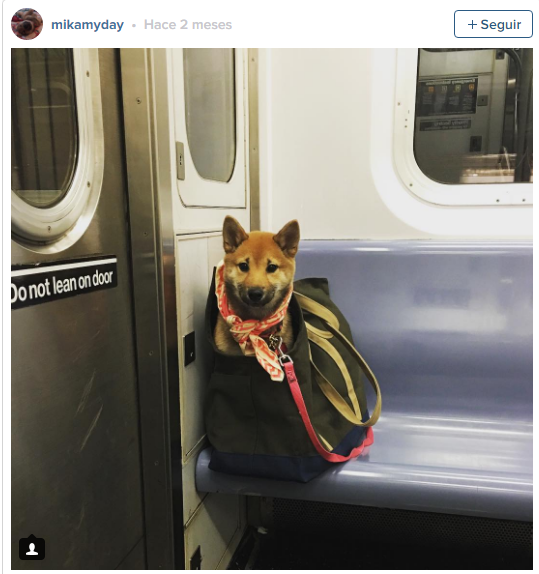 fireshot-capture-8-nyc-subway-bans-dogs-unless-t_-https___www-rover-com_blog_nyc-subway-dogs-fs_