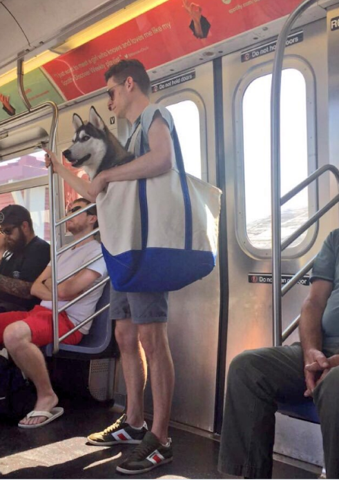 fireshot-capture-9-nyc-subway-bans-dogs-unless-t_-https___www-rover-com_blog_nyc-subway-dogs-fs_